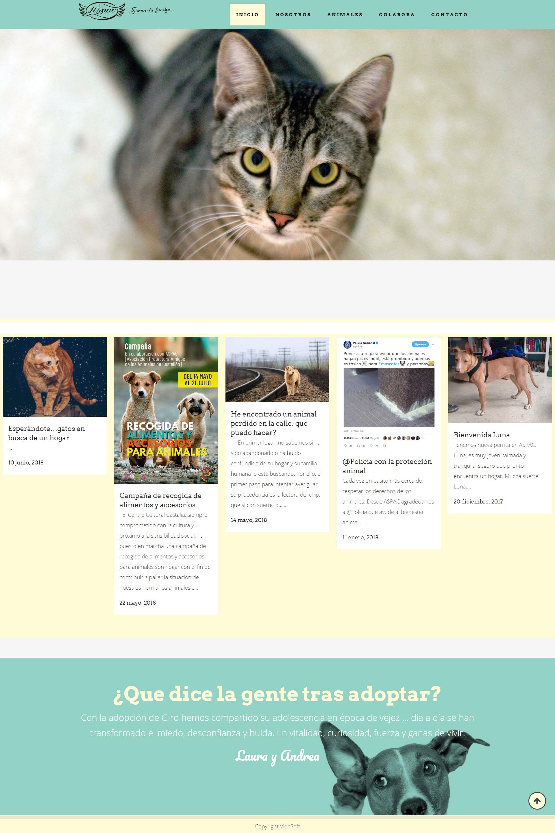 Web protectora animales en Castellón ASPAC